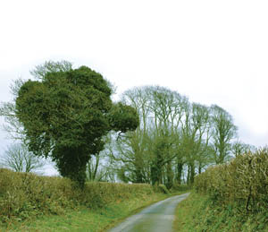 country lane.jpg
